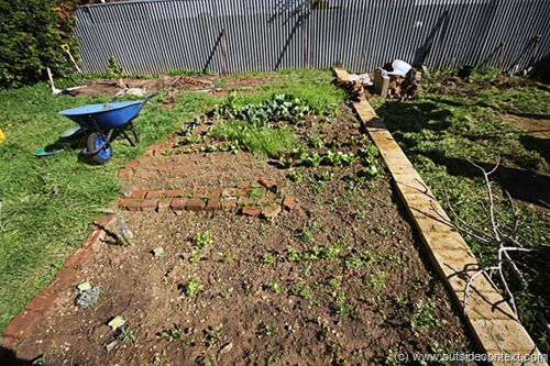 Franco's garden after we cleared it