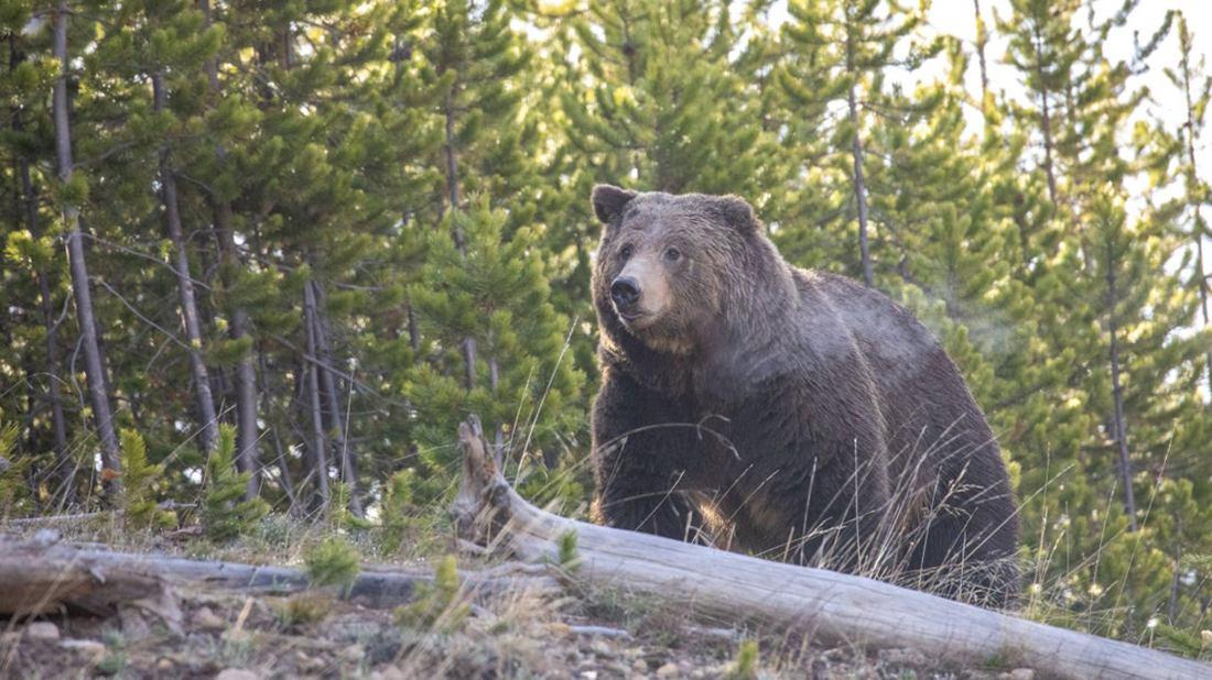 A Friendly Reminder: Wild Animals Will Still Mess You Up