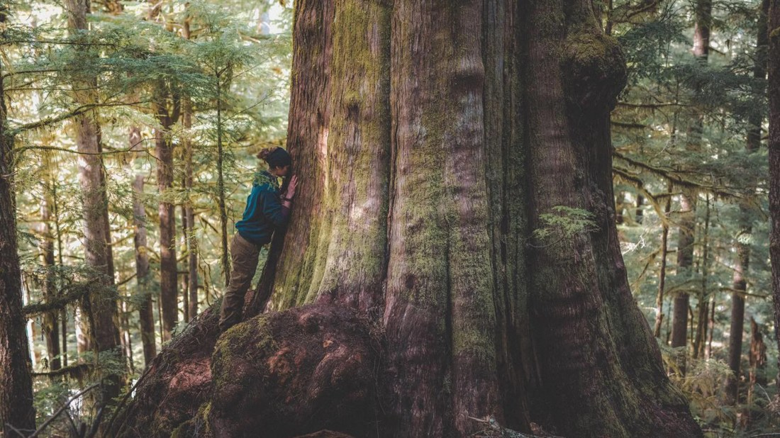 In British Columbia, the Fight for Old Growth Rages On