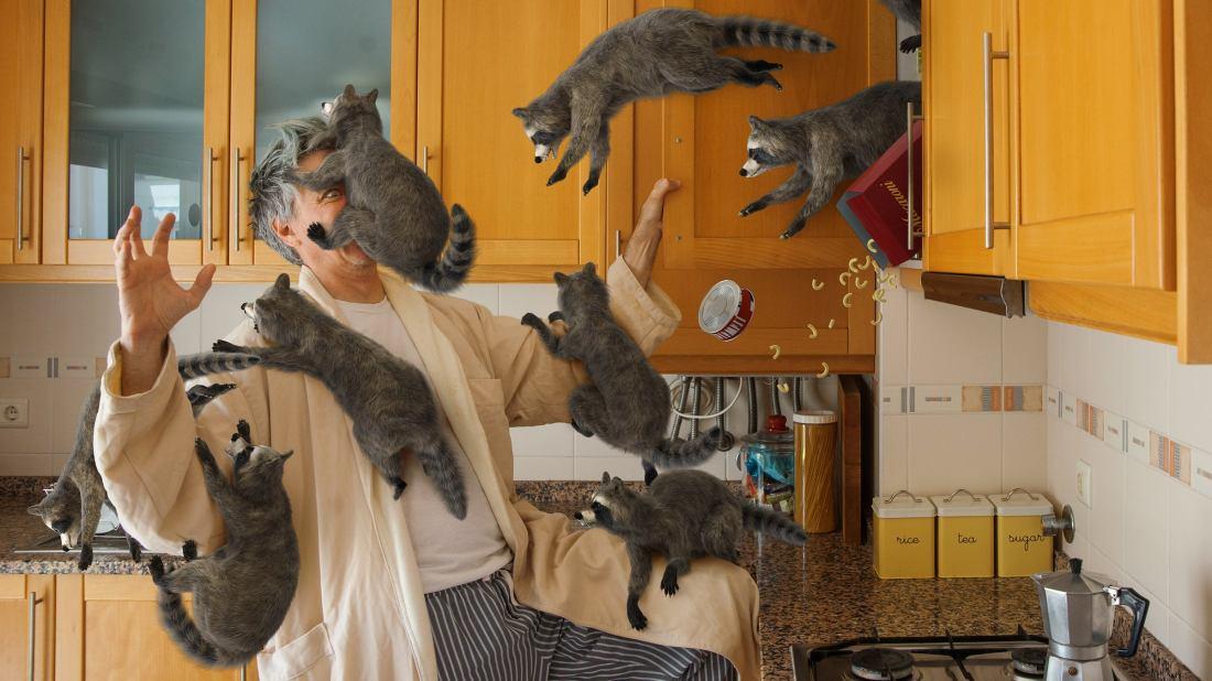 When Wild Animals Misbehave