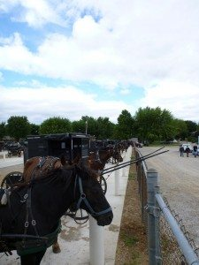 "Horses Lined Up ""Parked"" At The Flea Market In Shipshewana"