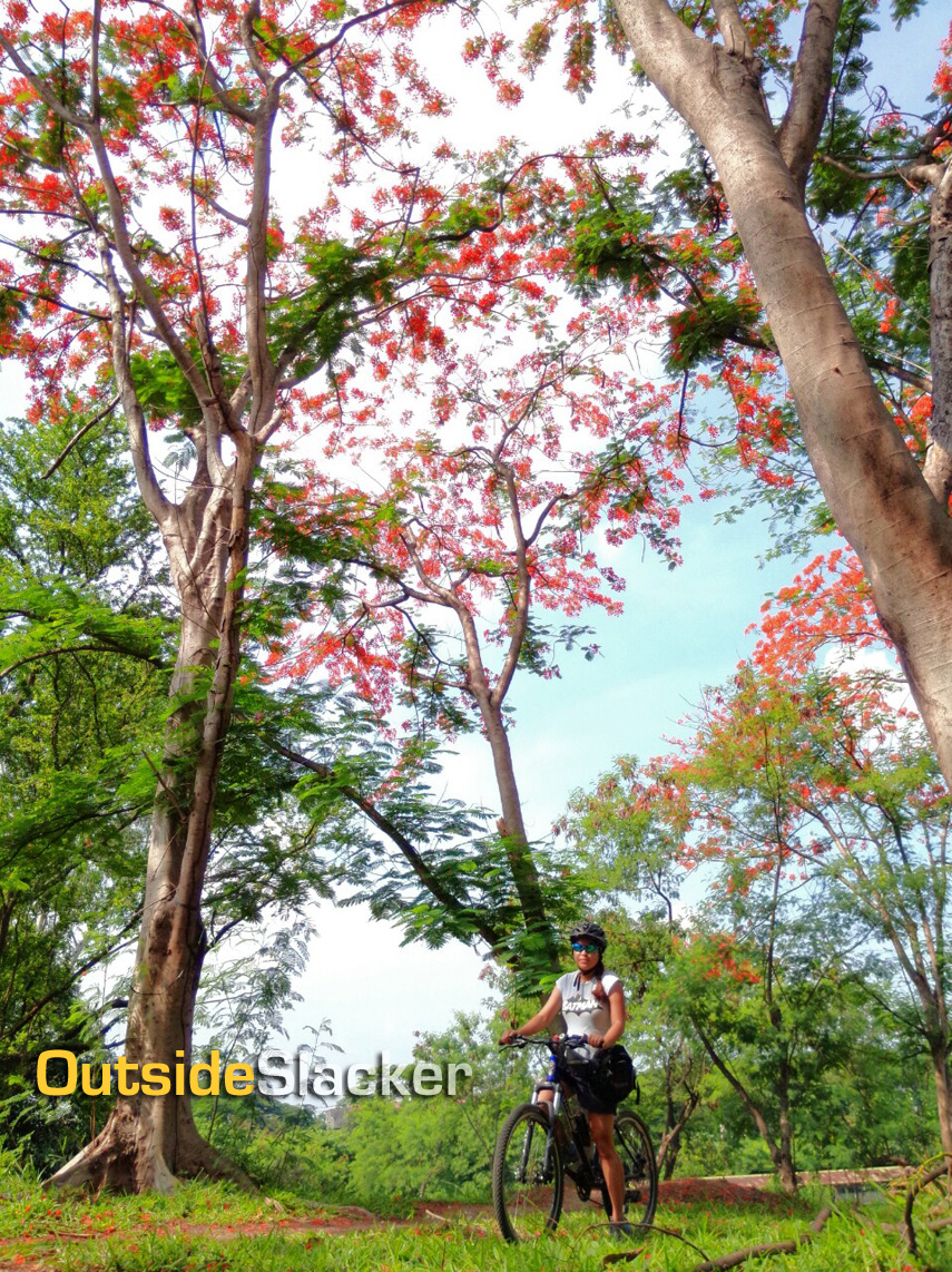 The UP Diliman Trail