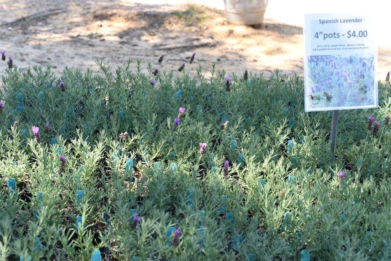 Lavender Ridge Farms