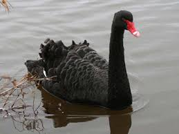 Black swans and wicked problems
