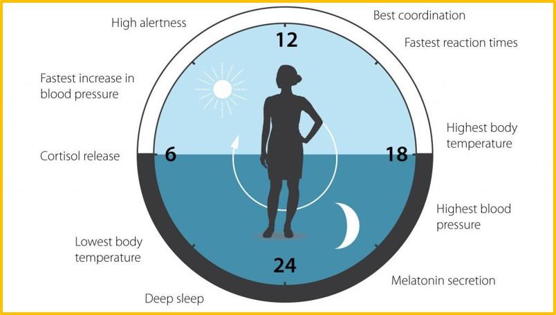 Do you know your circadian rhythm?