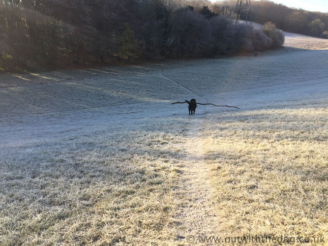 Dog with branch in frosty field