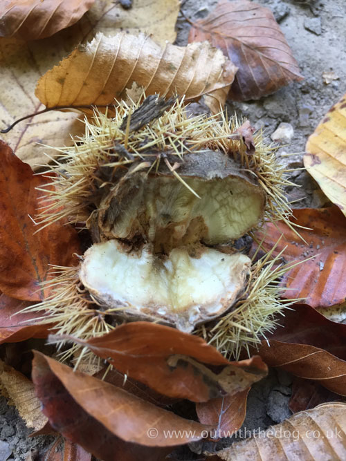 Autumn Chesnut