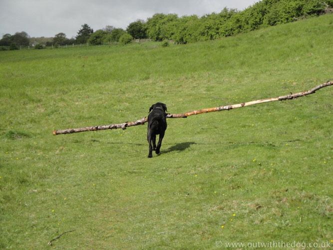 Bredhurst Woods Dog in Strawberry Banks