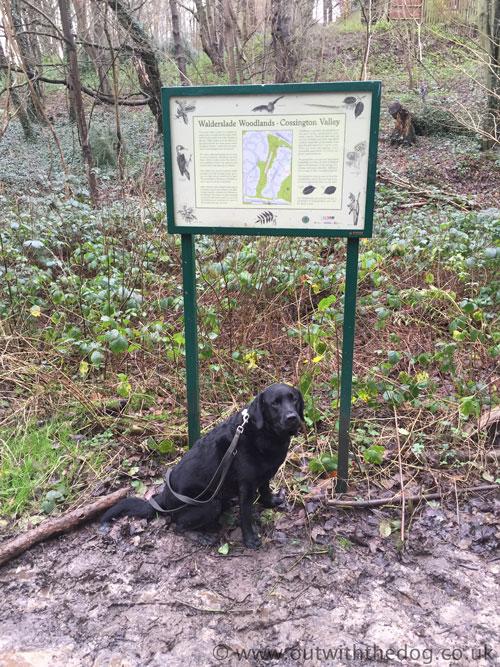 ossington Valley notice board