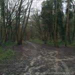 Tunbury Bottom woods