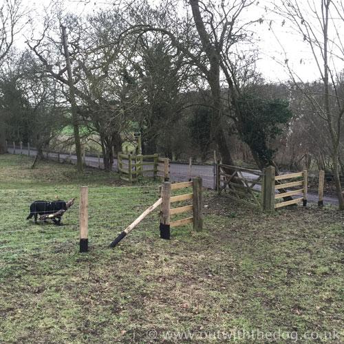 Queendown Warren - Five Bar Gate