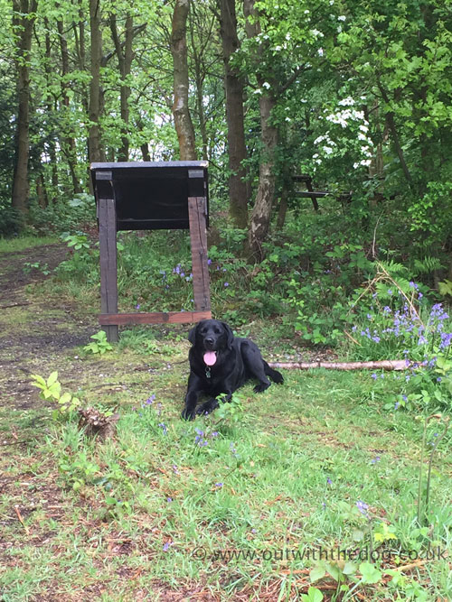 Holly Hill - Chilling out at the view point notice board.