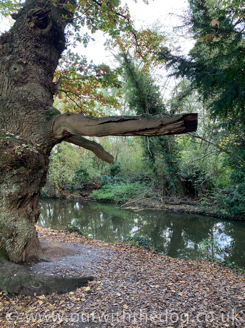 Lullingstone Country Park: River and tree