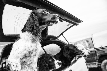 Game Shoot_Althorp_016