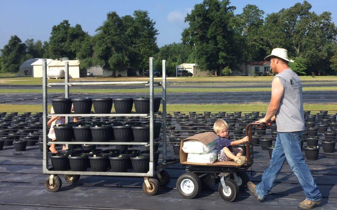 Overland Cart Testimonial: Shady Creek Greenhouse