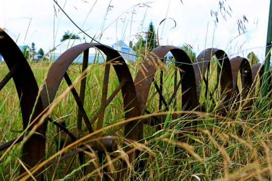 Several farmers fenced their yards with steel wheels of different kinds.