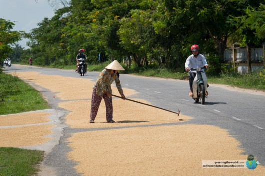 Drying rice on the roads in Hoi An