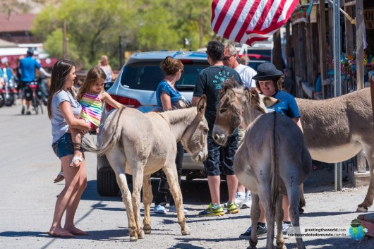 OATMAN-ARIZONA-USA-6