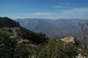 Batopilas to Urique - pines