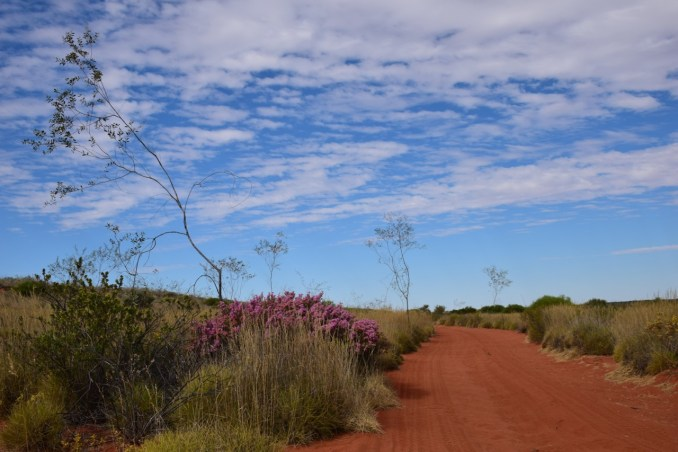 Red track and pink flowers