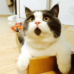 Cat That Looks Permanently Shocked!