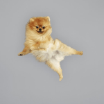 15 Amazing Jumping Dogs