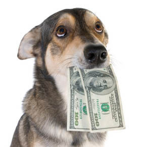 Doggy with cash in mouth