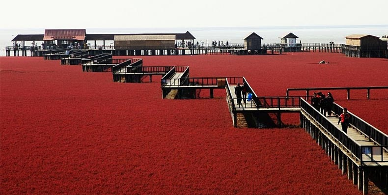 Red Panjin Beach in China