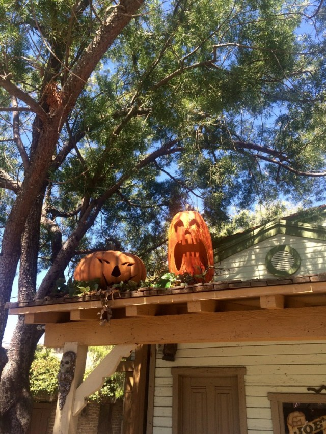 pumpkins-at-knotts