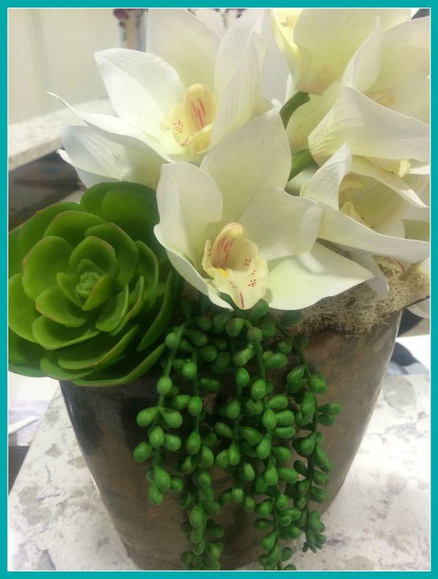 cosmeticare-succulent