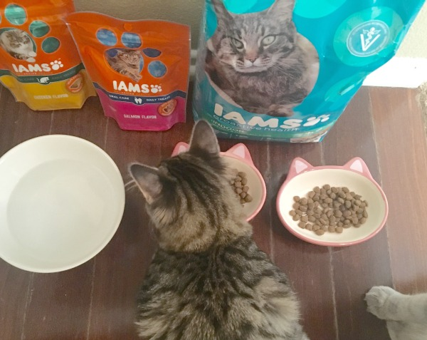 iams-dry-food-happy-cats