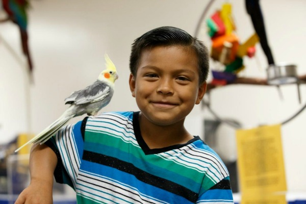 americas-family-pet-expo-bird