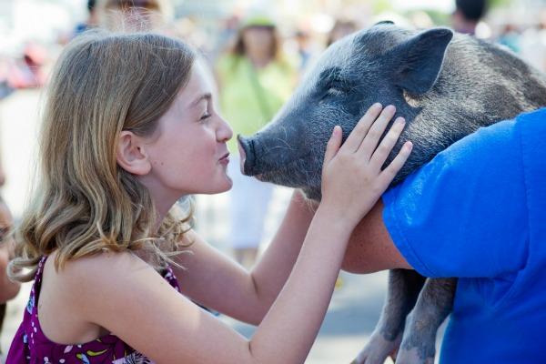 americas-family-pet-expo-hogs