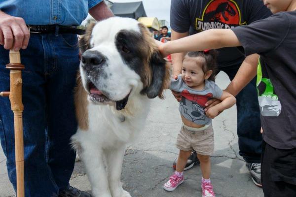 americas-family-pet-expo-petting