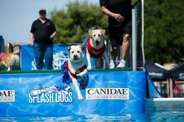 americas-family-pet-expo-splash-dogs