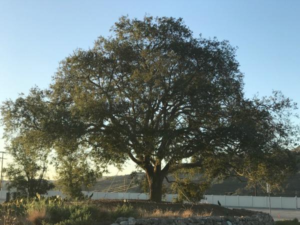 esencia-tree