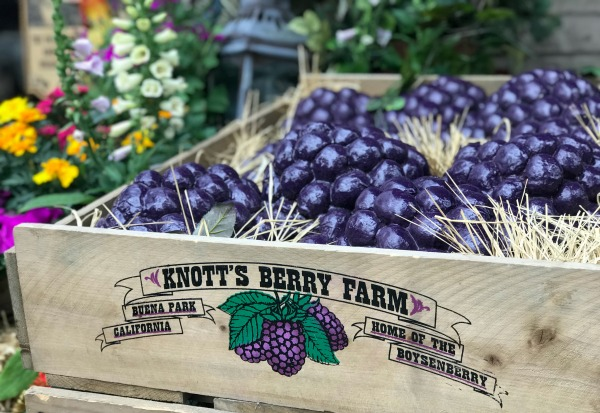 knotts-boysenberry-festival-crate