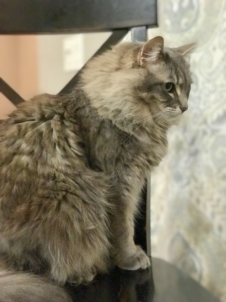 tips-for-teaching-your-child-to-be-a-responsible-cat-owner-2