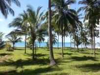 bankrut organic coconut farm