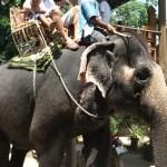olifant rit in Hua Hin