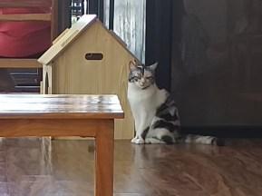 een kat met zn eigen huisje