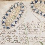 O manuscrito de Voynich contém uma mensagem genuína, alega pesquisador 3