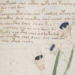 O manuscrito de Voynich contém uma mensagem genuína, alega pesquisador 4