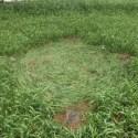 Dono de propriedade no Rio Grande do Sul, Brasil, vê luzes no céu e encontra marcas no solo na manhã seguinte 7