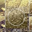 Vênus é habitado? Cientistas russos encontram 'evidências' de vida 17