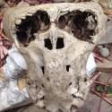 Dois crânios anômalos são descobertos na Rússia 1