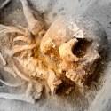 Uma espécie desconhecida cruzou com humanos na antiguidade, concluíram pesquisadores 40