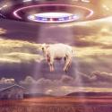 O que acontece durante uma abdução alienígena? 11