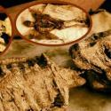 Cadáveres de criaturas legendárias são encontrados em porão de antiga mansão 40
