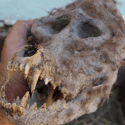 Criptozoologia: Fazendeiro búlgaro encontra crânio estranho em caixa acorrentada 11